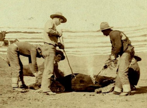 Cattle_branding_(Grabill_1888,_cropped)