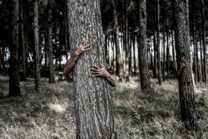 bescheidenheid in de houtbranche